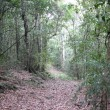 Along an old logging track.